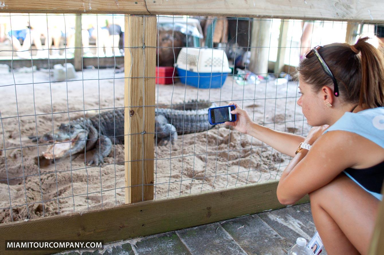 Alligator show da vida selvagem