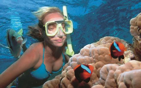 😎 Pratique Snorkel em Key West